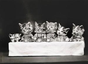 gato (6)