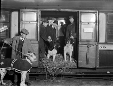 Cães saindo do seu trailer em Manchester.