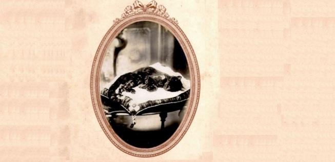 Fotografia post-mortem de um gato. Final do século 19.